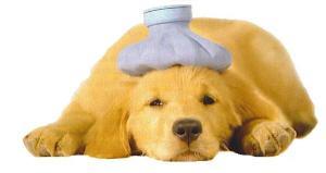 sick_puppy-600x319