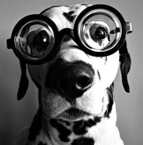 eyeglasses-dog